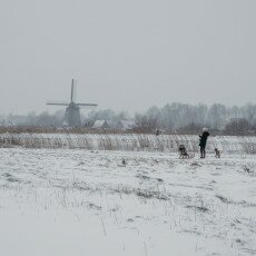 Snow and windmills 12