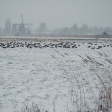Snow and windmills 16