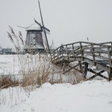 Snow and windmills 13