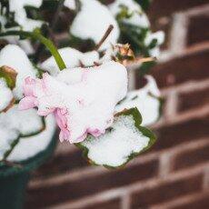 Snow storm in Alkmaar 08