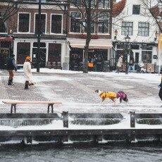 Snow storm in Alkmaar 19
