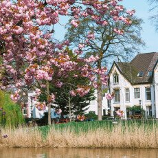 Cherry Blossom Alkmaar 10