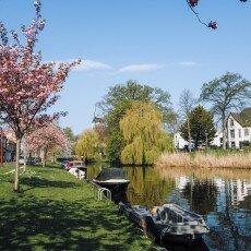 Cherry Blossom Alkmaar 14