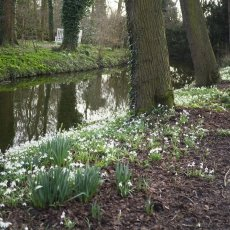 The canal close to Merkelbach, packed with snowdrops