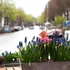 A spring morning in Amsterdam 26
