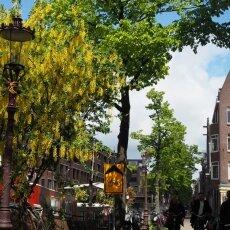 Spring snow in Amsterdam 23