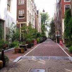 A very green street