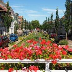 Summer in Delft 10