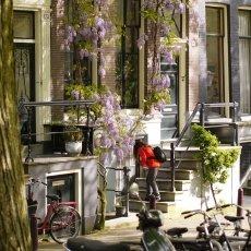 Sunny Day Amsterdam 15