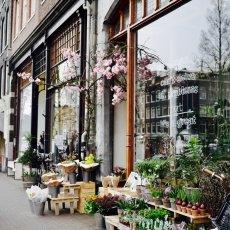 Sunny Spring Vondelpark 01