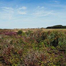 Hiking in Texel 30