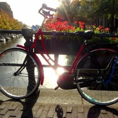 Bicycle in the moning light