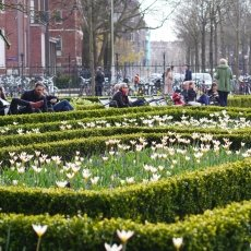 The Rijksmuseum garden