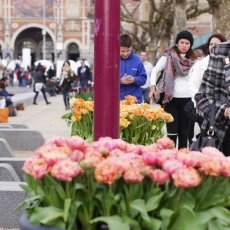People admiring the tulips