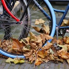 Autumn in Utrecht 14