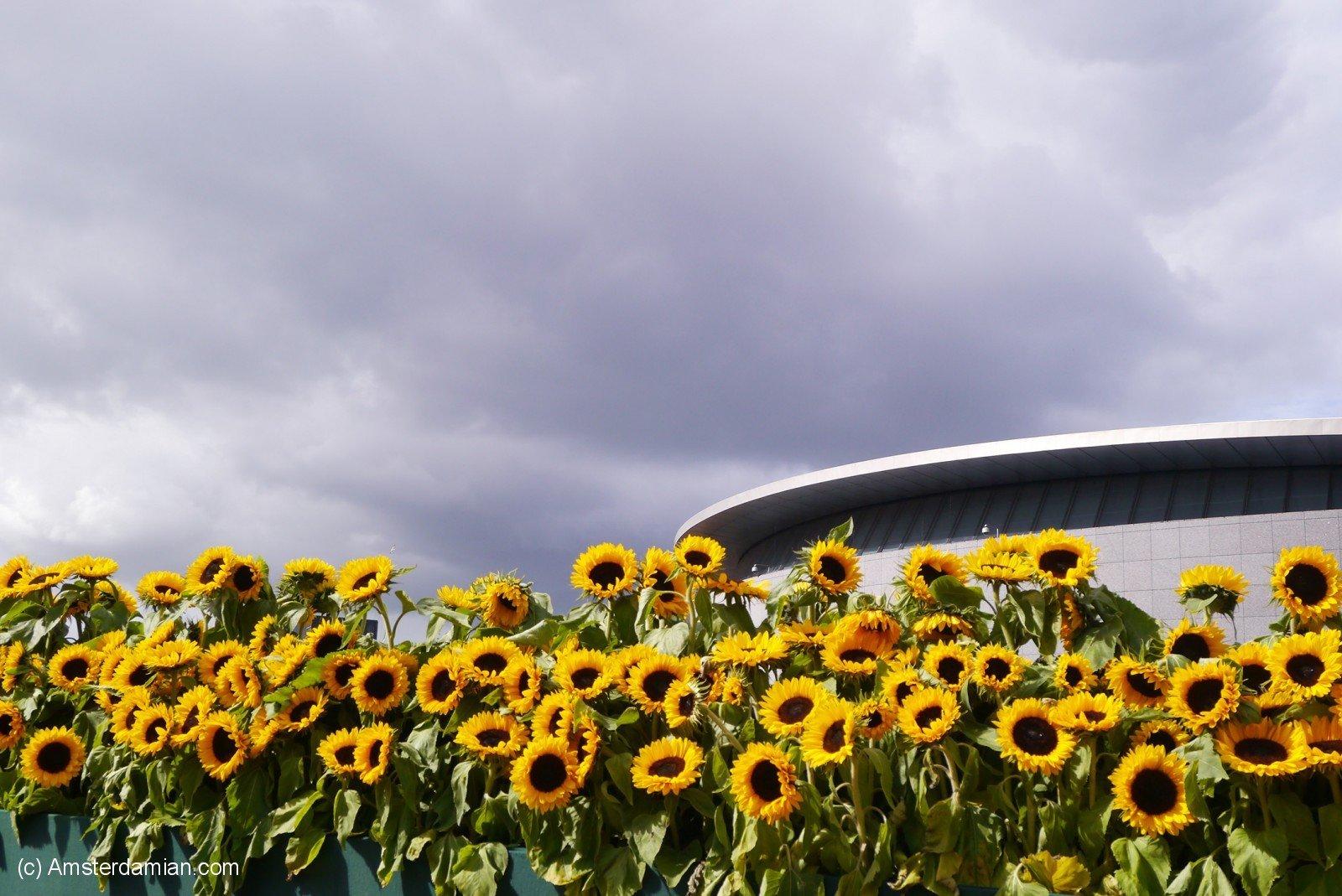 Van Gogh Sunflower Labyrinth 09