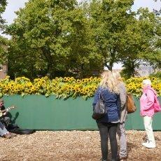 Van Gogh Sunflower Labyrinth 05
