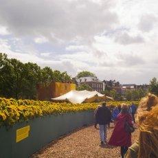 Van Gogh Sunflower Labyrinth 06