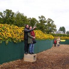 Van Gogh Sunflower Labyrinth 10
