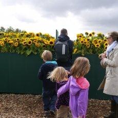 Van Gogh Sunflower Labyrinth 13