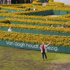 Van Gogh Sunflower Labyrinth 15