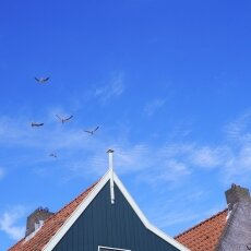 Pretty Dutch Villages: Volendam 16