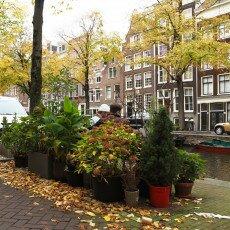 Amsterdam in yellow coat 15