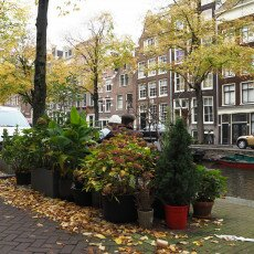 Amsterdam in yellow coat 16