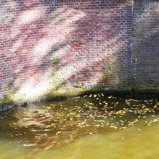 Yellow Autumn Sunday 06