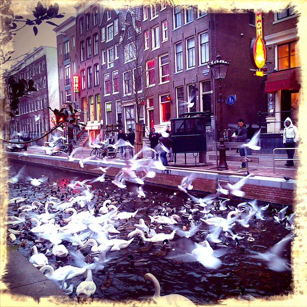 Birds on the canals of Red Light