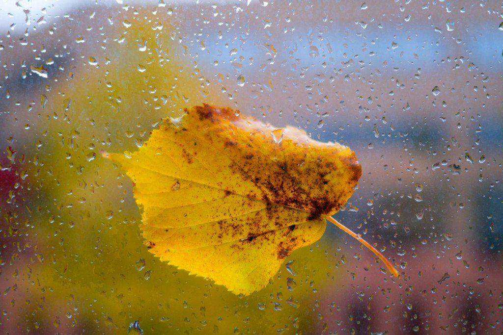 Yellow leaf on the window