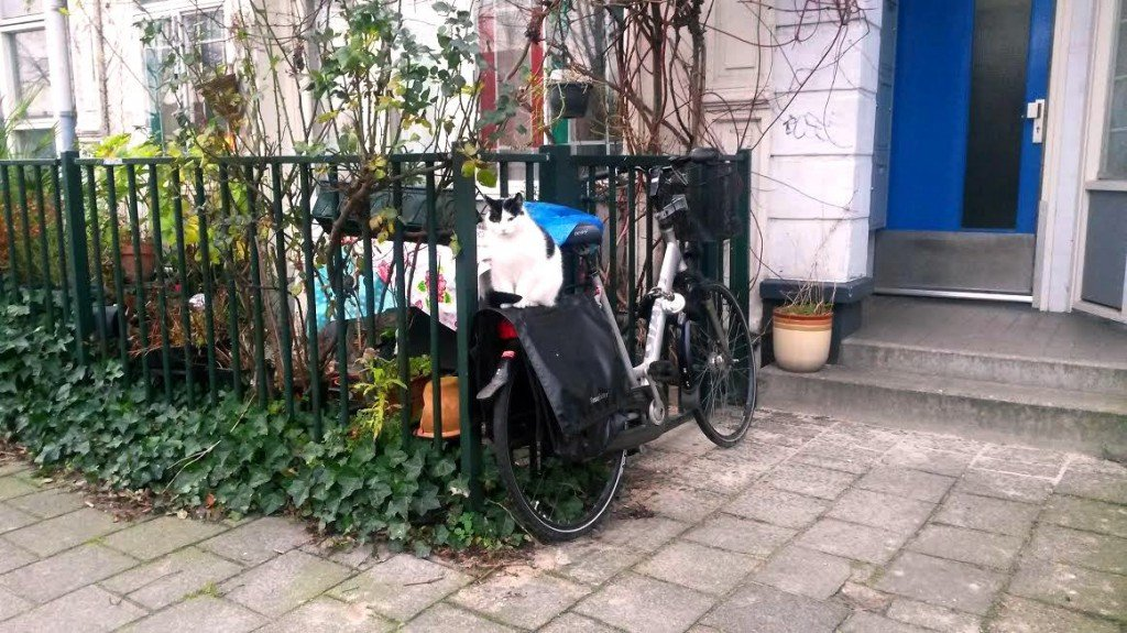 Cat on a bike in Amsterdam