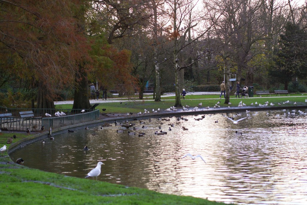 Birds in Westerpark