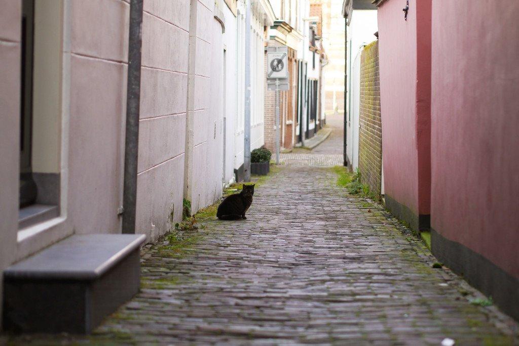 Hoorn cat