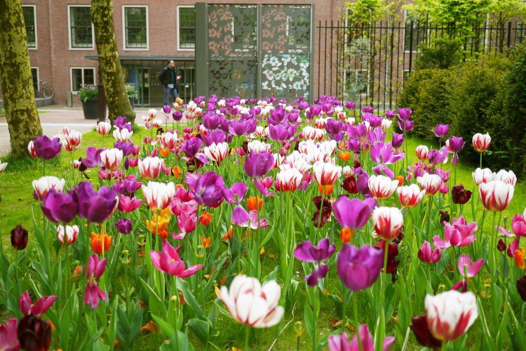 Springtime in Amsterdam 05