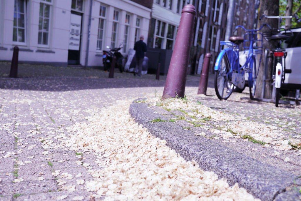 Springtime in Amsterdam 16