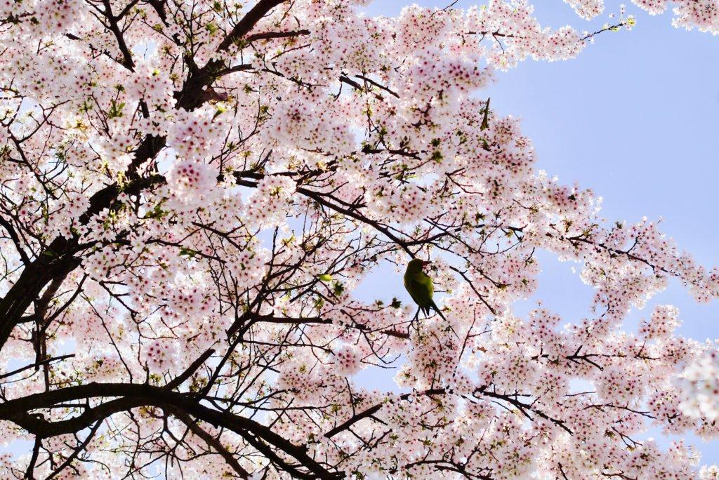 Springtime in Amsterdam 07