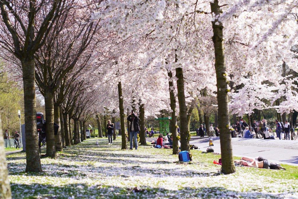 Springtime in Amsterdam 06