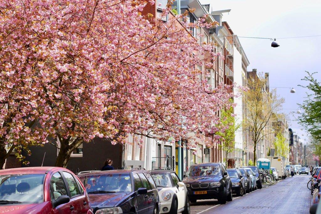 Springtime in Amsterdam 08