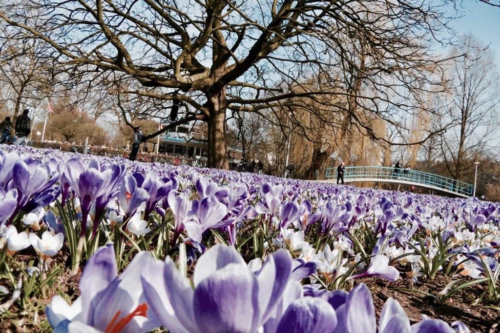Springtime in Amsterdam 03