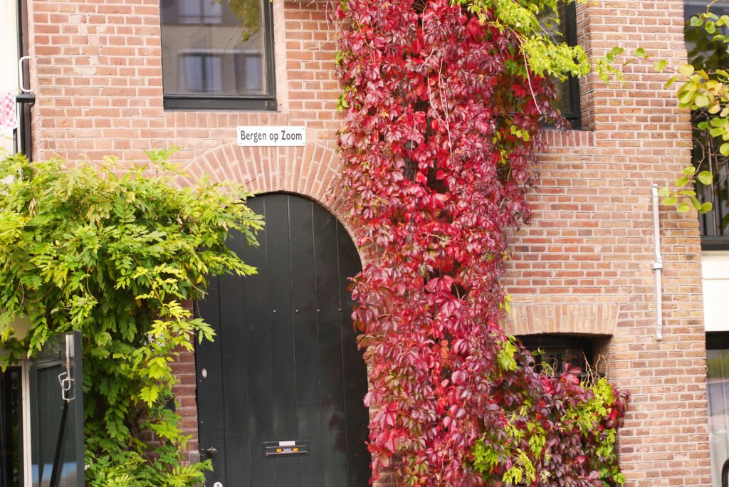 Autumn in Amsterdam 01