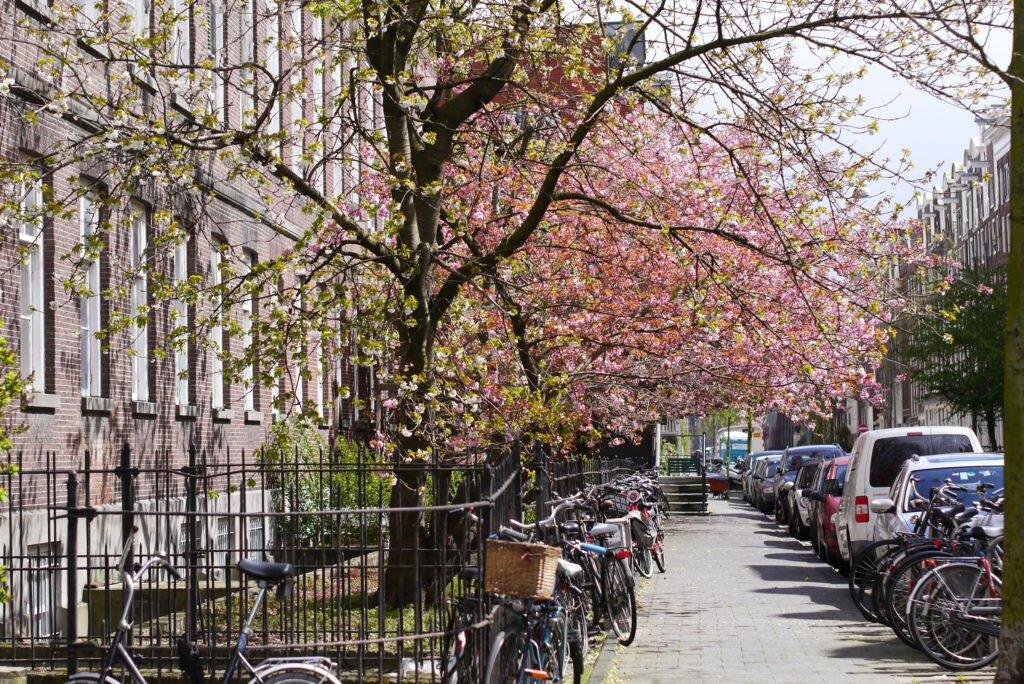 A sunny street