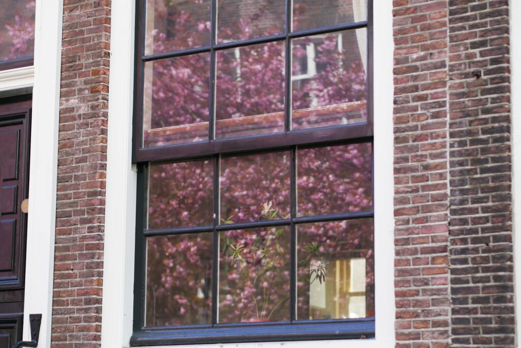 Cherry blossom reflected into a window