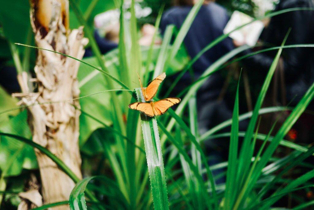 Hortus Botanicus 07