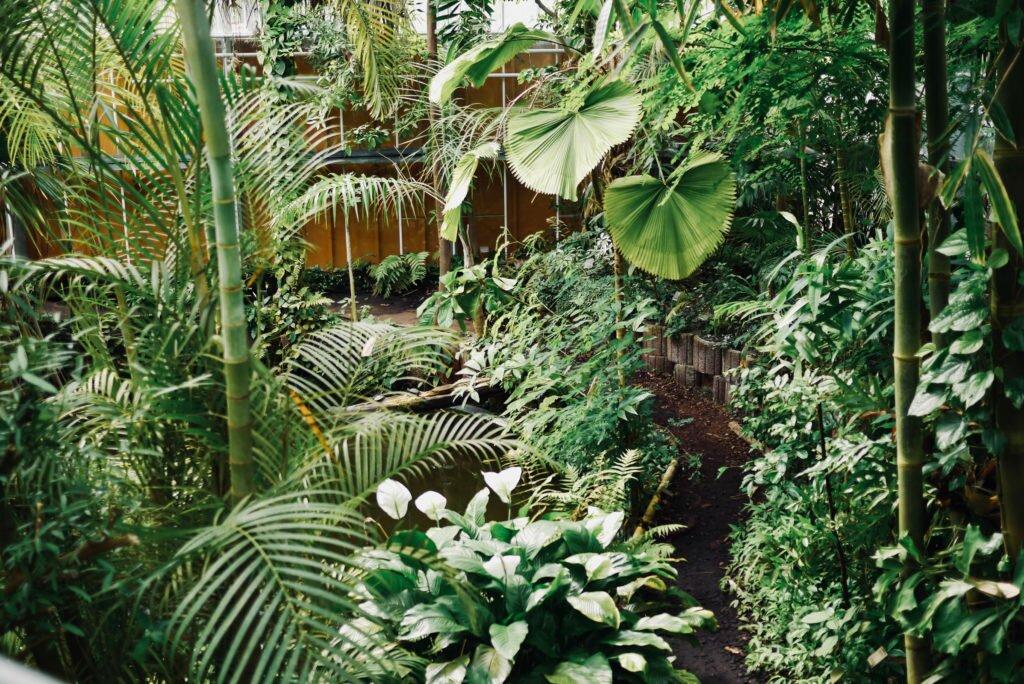 Hortus Botanicus 13