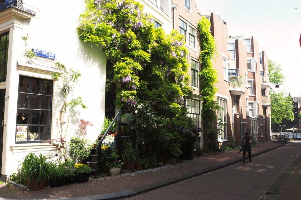 Sunny days in Amsterdam 01