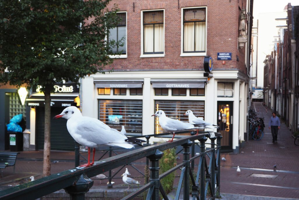 Seagulls in the Red Light District