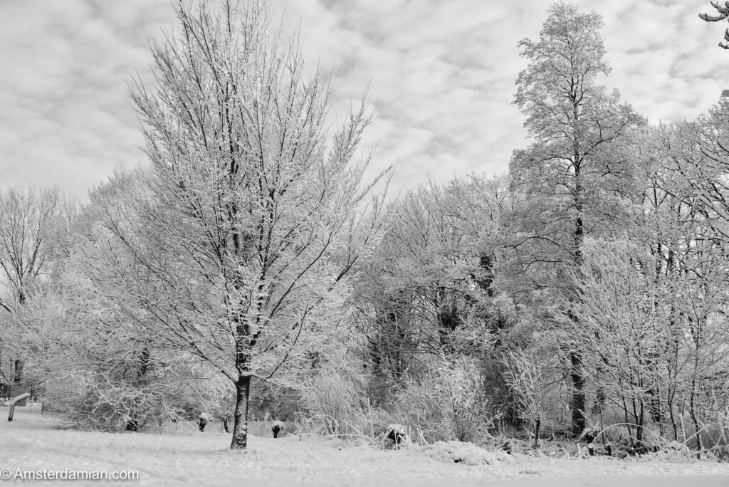 Winter in black and white 13