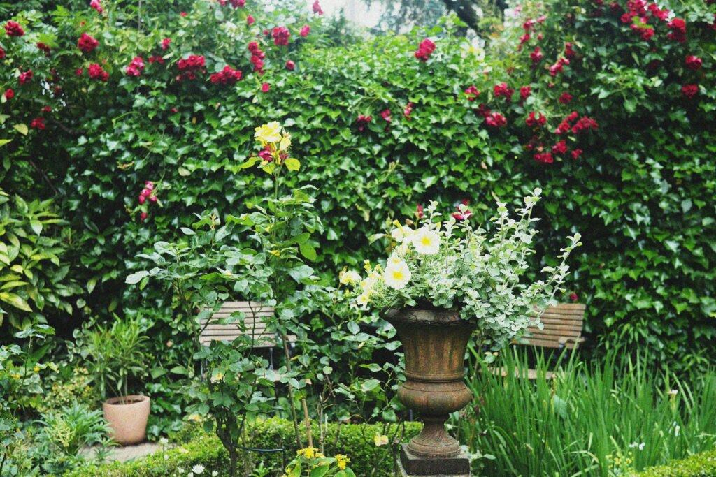 Open Garden Days 04