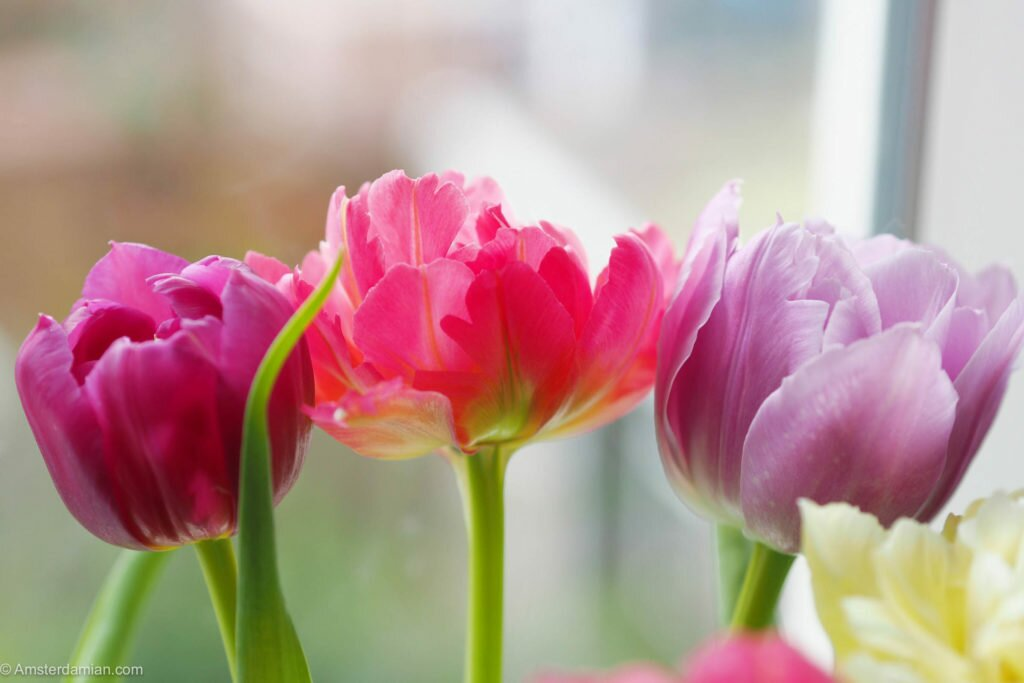 Spring in my home 01